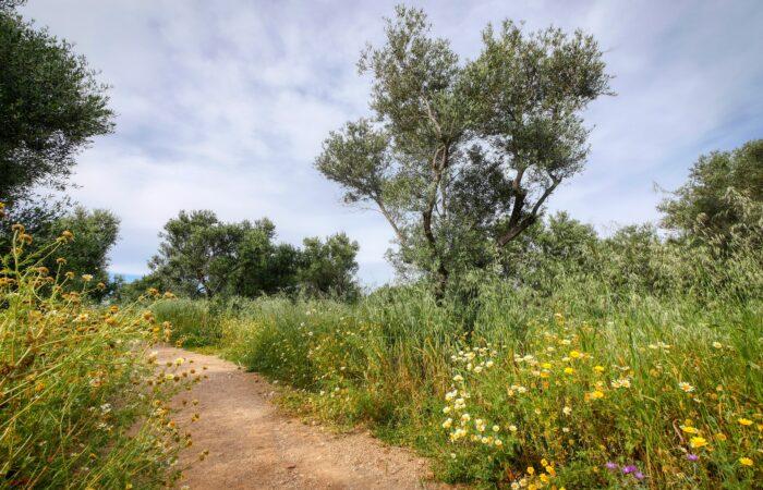 Kydoni Gorge Meskla Hiking in Crete